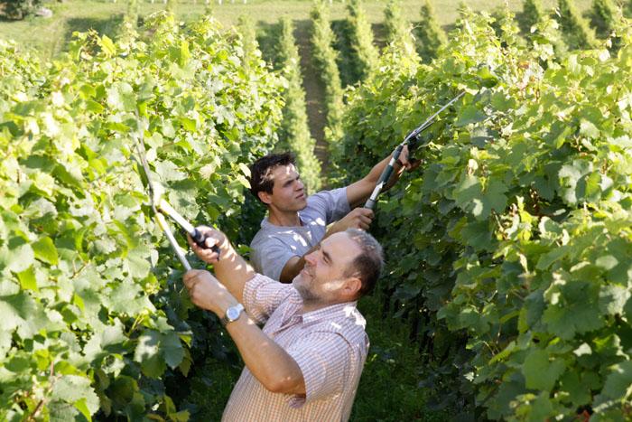 Familie Kerbl bei der Arbeit im Weingarten